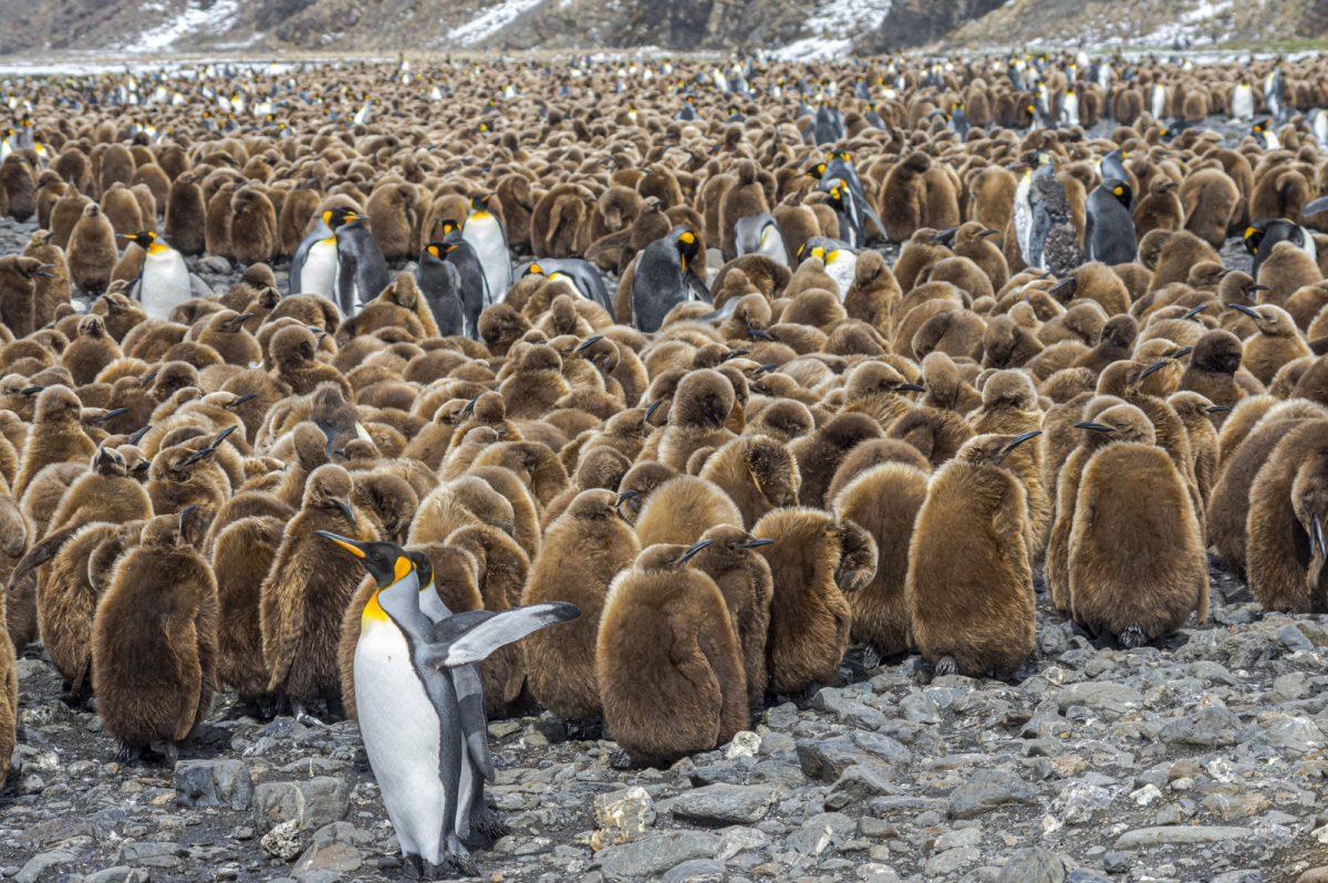Antarktischer Kindergarten